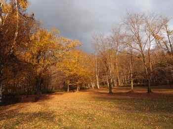 枯れ葉の絨毯.jpg